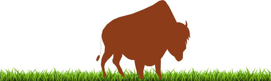 Bison herbe 1