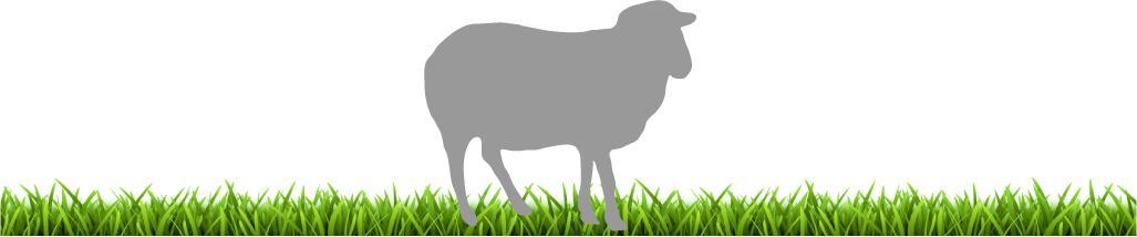 Mouton herbe 2